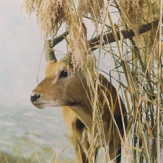 Bjorn Larsson, safari