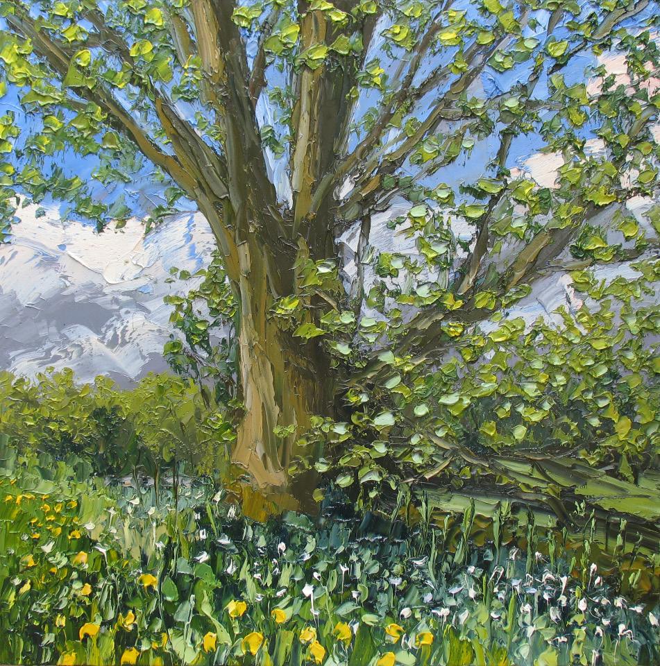 Colin Halliday, Spring