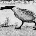 Tim Southall, Hissing Goose