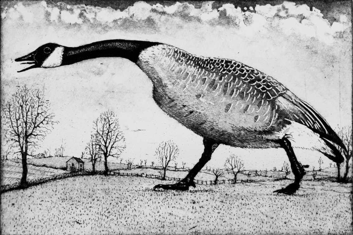 Hissing Goose, etching and aquatint, 20 x 30 cm, £185, unframed, £235 framed